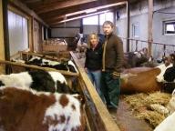 Amenzi de 10 ori mai mari pentru fermierii care nu declară animalele bolnave