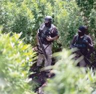 Raport: Razboiul impotriva drogurilor a esuat. Guvernele ar trebui sa legalizeze marijuana