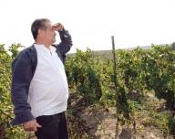 Via boierului Bibescu produce vinul lui Dinescu