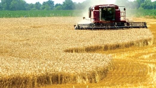 Soluţia rapidă a fermierilor care au nevoie de bani pentru lucrările agricole: creditul-instant de la IFN-uri. Se dau împrumuturi şi pentru achiziţia de terenuri