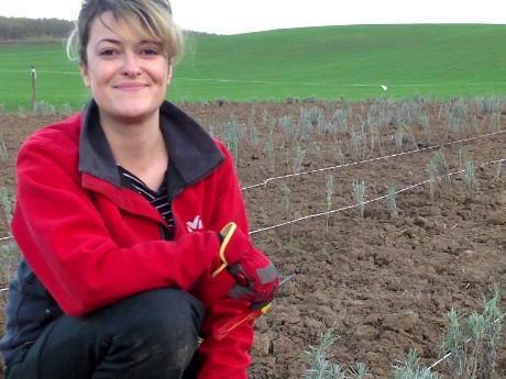 """Secretele cultivării lavandei: Ce trebuie să știi înainte să începi o afacere cu """"aurul mov"""" din agricultură"""