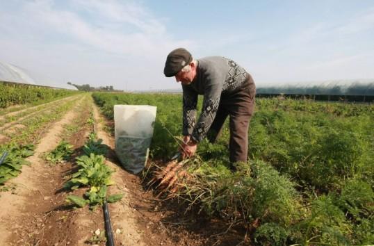 Agricultorii susţin că nu au piaţă de desfacere pentru produsele naturale