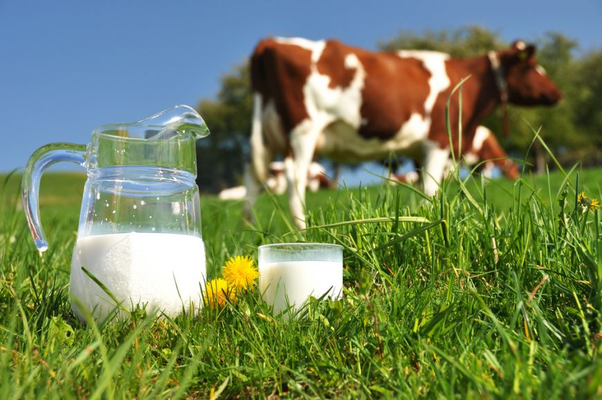 De unde provine laptele din magazine