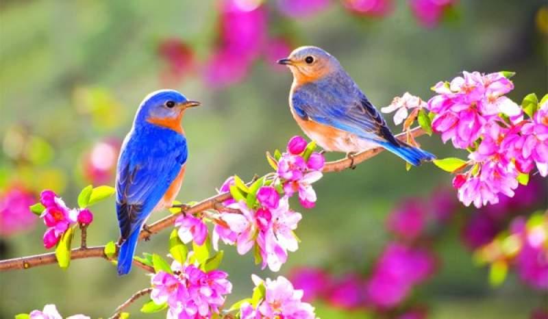 Echinocțiul de primăvară. Ce spune tradiția și când se schimbă ora
