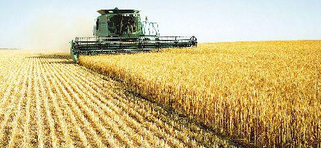 Anul trecut producţia agricolă vegetală a scăzut la majoritatea culturilor