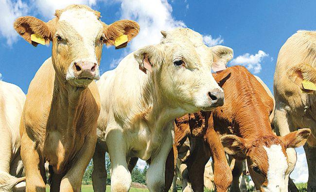 Exporturile de animale vii au adus României peste 315 mil. euro