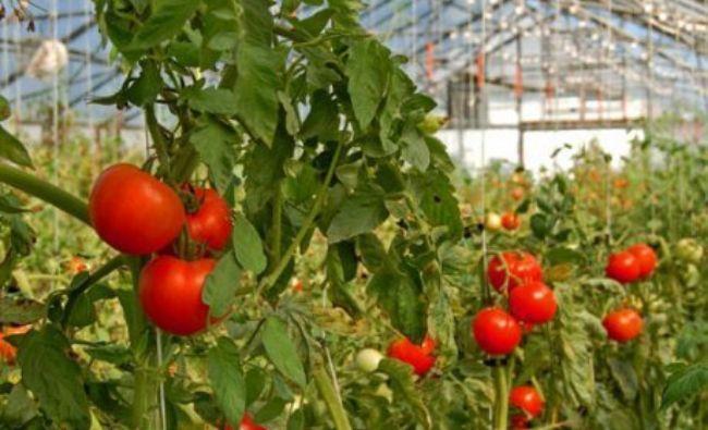 Cum a decis Guvernul să sprijine fermierii. Zeci de milioane de EURO sunt în joc