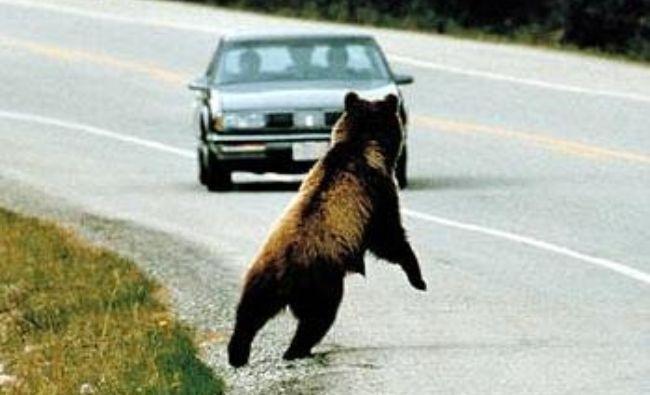 Avem autostrăzi puține și prost planificate: A1, abator de urși