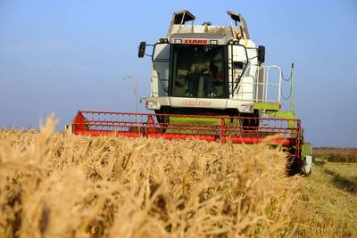 Goana după terenuri agricole continuă: Investitorii vor să își dubleze portofoliile în trei ani