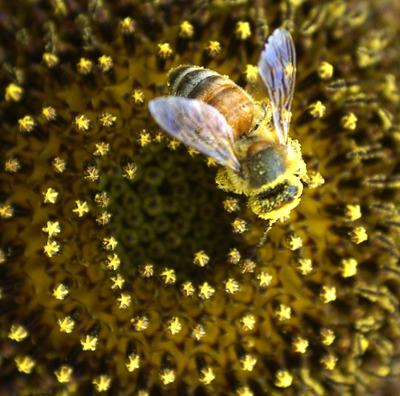 Iarna grea reduce produţia de miere