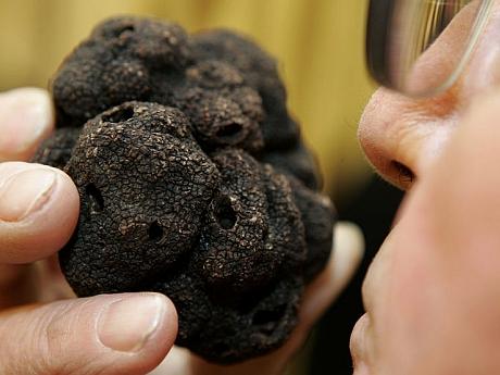 Secretele ciupercii-caviar. Cum se cultivă trufele în România și câți bani se pot câștiga din această afacere